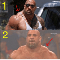 Memes, The Rock, and Trap: bossgainz  @bossgainz The Rock or Goldberg traps? Check out these trap exercises. Via @bossfitarmy - - bossgainz Hardwork discipline stronger shoulders