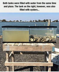 Time, Water, and Tank: Both tanks were filled with water from the same time  and place. The tank on the right, however, was also  filled with oysters... <p>Natural Water Filter.</p>