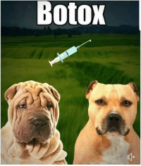 Fresh, Funny, and Botox: Botox