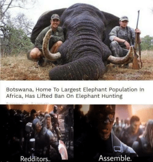 *Avengers theme plays*: Botswana, Home To Largest Elephant Population In  Africa, Has Lifted Ban On Elephant Hunting  Assemble.  Redditors. *Avengers theme plays*