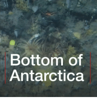 Memes, Nature, and Video: Bottom of  Antarctica This video of the seabed off the Antartic Peninsula filmed by BBC environment correspondent Claire Marshall has helped scientists to get the area special protection. The footage was gained during a @greenpeace submarine trip more than 1000ft deep. oceanography wildlife antartic marinelife nature bbcnews