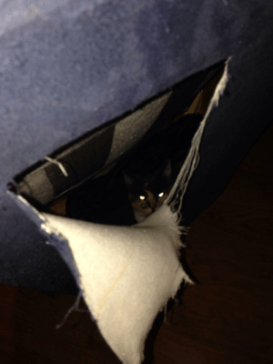 Craigslist, Couch, and Home: Bought a couch from Craigslist, heard noises coming from it after bringing it home. Cut it open and found a cat