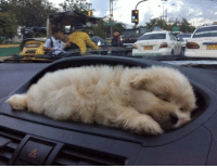 "Puppy, Girl Memes, and Car: ""Bought a new car. It came with a puppy holder..."" https://t.co/4r47sY9y1r"