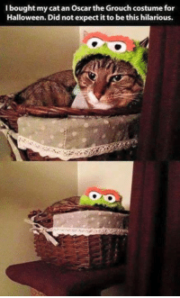costumes for halloween: bought my cat an Oscar the Grouch costume for  Halloween. Did not expect it to be this hilarious.
