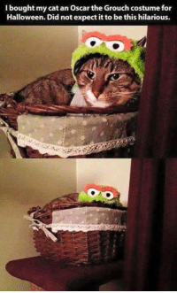 Haha..:): bought my cat an Oscar the Grouch costume for  Halloween. Did not expect it to be this hilarious. Haha..:)