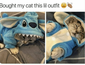 AWWW: Bought my cat this lil outfit AWWW