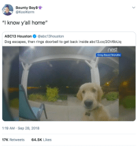 "I can see the light inside Susan, open up (via /r/BlackPeopleTwitter): Bounty Boy$  @KoolKerm  ""I know y'all home""  ABC13 Houston@abc13houston  Dog escapes, then rings doorbell to get back inside abc13.co/20V6bUq  nest  :19 AM Sep 28, 2018  17K Retweets  64.5K Likes I can see the light inside Susan, open up (via /r/BlackPeopleTwitter)"