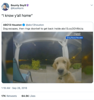 "I can see the light inside Susan, open up: Bounty Boy$  @KoolKerm  ""I know y'all home""  ABC13 Houston@abc13houston  Dog escapes, then rings doorbell to get back inside abc13.co/20V6bUq  nest  :19 AM Sep 28, 2018  17K Retweets  64.5K Likes I can see the light inside Susan, open up"