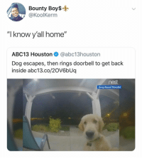 "🙋🏻‍♀️: Bounty Boys-  @KoolKerm  ""I know y'all home""  ABC13 Houston@abc13houston  Dog escapes, then rings doorbell to get back  inside abc13.co/2OV6bUq  nest  Greg Basel/Storyful 🙋🏻‍♀️"