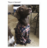 """Girl Memes, Boys, and Give Me: """"Boys in flannels"""" GIVE ME"""