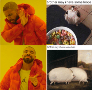Dank Memes, Brother, and Oats: bröther may i have some lööps  STARECATCOM  bröther may i have some öats I require some öats