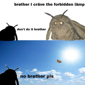 Remember moth memes or is it just me?: brøther I cräve the forbidden lämp  don't do it brøther  no brøther pls Remember moth memes or is it just me?