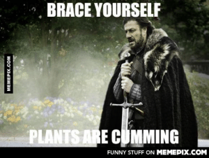 To everyone with seasonal allergiesomg-humor.tumblr.com: BRACE YOURSELF  PLANTS ARE CUMMING  FUNNY STUFF ON MEMEPIX.COM  MEMEPIX.COM To everyone with seasonal allergiesomg-humor.tumblr.com