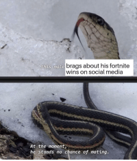"""Dank, Meme, and Social Media: brags about his fortnite  wins on social media  This male  At the moment  he stands no chance of mating. <p>He has lost all hope via /r/dank_meme <a href=""""https://ift.tt/2NC086f"""">https://ift.tt/2NC086f</a></p>"""