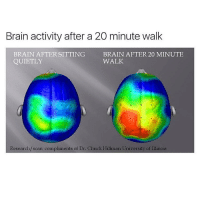 The average person walks the equivalent of three times around the world in a lifetime 🚶🏃: Brain activity after a 20 minute walk  BRAIN AFTER SITTING  BRAIN AFTER 20 MINUTE  WALK  QUIETLY  Research/scan compliments of Dr. Chuck Hillman University of Illinois The average person walks the equivalent of three times around the world in a lifetime 🚶🏃