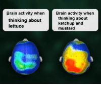 oww my brian: Brain activity when  Brain activity when  thinking about  lettuce  thinking about  ketchup and  mustard oww my brian