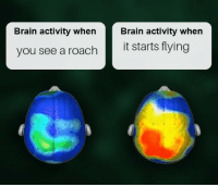 Brain, House, and Down: Brain activity when  Brain activity when  you see a roach t starts flying Burn the house down