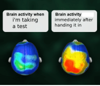 Brain, Test, and MeIRL: Brain activity when  i'm taking  a test  Brain activity  immediately after  handing it in Meirl
