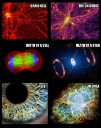 "Memes, Magnificent, and 🤖: BRAIN CELL  BIRTH OF A CELL  EYE  THE UNIVERSE  DEATH OF ASTAR  NEBULA ""Through our eyes, the universe is perceiving itself. Through our ears, the universe is listening to its harmonies. We are the witnesses through which the universe becomes conscious of its glory, of its magnificence.""  ― Alan W. Watts  Pantheism: Everything is Connected, Everything is Divine  www.pantheism.com Facebook Group: www.facebook.com/groups/pantheism"