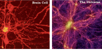 Memes, 🤖, and The Universe: Brain Cell  The Universe universe Brain Cell - Universe
