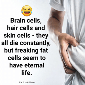 ;): Brain cells,  hair cells and  skin cells they  all die constantly,  but freaking fat  cells seem to  have eternal  life.  The Purple Flower ;)