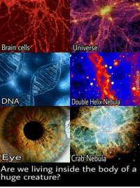 "Tumblr, Blog, and Brain: Brain cells  Universe  DNA  Double Helix Nebula  Eye  Are we living inside the body of a  huge creature?  Crab Nebula. . <p><a href=""http://awesomacious.tumblr.com/post/170098429763/what-if-the-universe-is-a-giant-living-organism"" class=""tumblr_blog"">awesomacious</a>:</p>  <blockquote><p>What if the Universe is a Giant living organism?</p></blockquote>"