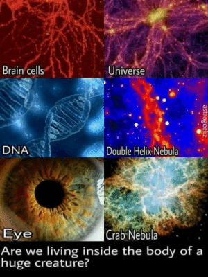 Brain, Giant, and Living: Brain cells  Universe  DNA  Double Helix Nebula  Eye  Are we living inside the body of a  huge creature?  Crab Nebula. . What if the Universe is a Giant living organism?