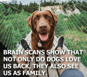 We're part of the pack now: BRAIN SCANS SHOW THAT  NOT ONLY DO DOGS LOVE  US BACK,THEY ALSO SEE  US AS FAMILY. We're part of the pack now