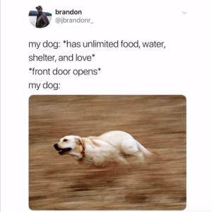 LATER LOSERS.Tw: @jbrandonr_: brandon  @jbrandonr_  my dog: *has unlimited food, water,  shelter, and love*  *front door opens*  my dog: LATER LOSERS.Tw: @jbrandonr_