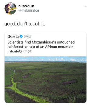 Good, Quartz, and Top: bRaNdOn  @melaninboi  good. don't touch it.  Quartz@qz  Scientists find Mozambique's untouched  rainforest on top of an African mountain  trib.al/iQHtFOF Leave it the way it is