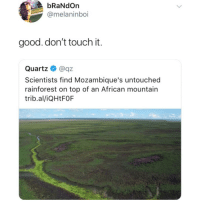 Memes, Good, and 🤖: bRaNdOrn  @melaninboi  good. don't touch it.  Quartz @qz  Scientists find Mozambique's untouched  rainforest on top of an African mountain  trib.al/iQHtFOF I'm dying at what @memezar just posted 😂😂