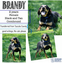 Cats, Dogs, and Memes: BRANDY  2 years  Female  Black and Tar  Coonhound  Transferred from Tuscola County  good w/dogs, No cats please  HUMANE  SOCIETY  MIDLAND COUNTY All dogs/puppies in our shelter can be viewed here.  Any dog not being held as a stray is available for immediate, same-day adoption! Adoption applications are reviewed on site. Please share our dogs and help get them out of the shelter as quickly as possible!  **PLEASE NOTE**  Placing an application on a dog featured in this album does NOT hold the dog for you.  All available dogs are available to be met and adopted same day if already altered.  If not altered, the dog can be met and paid for in order to hold the dog for you.  Thank you for your understanding!