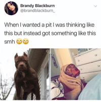 Funny, Smh, and E.T.: Brandy Blackburn  @brandblackburn_  When I wanted a pit l was thinking like  this but instead got something like this  smh What a cutie he looks like E.T 😂