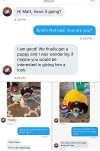 <p>&ldquo;They&rsquo;re good dogs Brent&rdquo; guy comes full circle with WeRateDogs and shares his new puppy</p>: @brant  Hi Matt, hows it going?  8:36 PM  Brant! Not bad, how are you?  8:52 PM  I am good! We finally got a  puppy and I was wondering if  maybe you would be  interested in giving him a  look  9:01 PM  Charlie  9:33 PM  9:45 PM  DOES HIS SHIRT HAVE HOT  DOGS ON IT  CAN HE GO INSIDE THE  PINEAPPLE IS IT HIS BED  HOME  9:35 PM  9:48 PM  Yes it does  Yes, that is where he sleeps  He's a very good dog  9:50 PM <p>&ldquo;They&rsquo;re good dogs Brent&rdquo; guy comes full circle with WeRateDogs and shares his new puppy</p>
