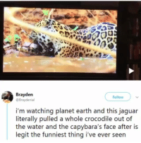 Memes, Earth, and Jaguar: Brayden  @Braydenial  Follow  i'm watching planet earth and this jaguar  literally pulled a whole crocodile out of  the water and the capybara's face after is  legit the funniest thing i've ever seen @epicfunnypage is literally the funniest page 👌🏻👌🏻