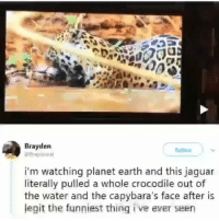 😳😳😳 @x__social_butterfly_x: Brayden  i'm watching planet earth and this jaguar  literally pulled a whole crocodile out of  the water and the capybara's face after is  legit the funniest thing i ve ever seen 😳😳😳 @x__social_butterfly_x