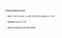 Animals, Anime, and Cute: bread maakesyoufat:  me: i cant move, a cute animal is asleep on  me  person: push it off  me: enraged and offended) https://t.co/srmHVrrcAx