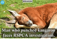 Memes, Peta, and Cunt: BREAKING  BREAKING  Man who punched kangaroo  faces RSPCA investigation. Oh fuck off peta you cunts  -BasedAustrayan