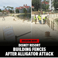Disney, Memes, and Alligator: BREAKING NEWS  DISNEY RESORT  BUILDING FENCES  AFTER ALLIGATOR ATTACK Disney taking precautions now 👀