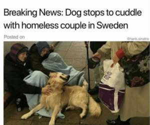 Awww! Those people look so happy!: Breaking News: Dog stops to cuddle  with homeless couple in Sweden  @tank.sinatra  Posted on  AOP  JST Awww! Those people look so happy!