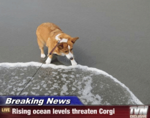 News Live: Breaking News  LIVE Rising ocean levels threaten Corgi  T  EXCLUSIVE
