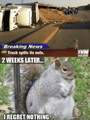 News, Breaking News, and Happy: Breaking News  LIVE Truck spills its nuts.  EXCLUSIVE  2 WEEKS LATER...  IREGRET NOTHING Happy squirrel
