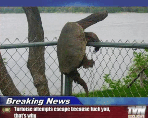 Fuck You, News, and Breaking News: Breaking News  LIVE Turtoise attempts escape because fuck you,  that's why  TYN  EXCLUSIVE