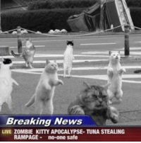 You guys don't seem to be enjoying our memes anymore :(: Breaking News  LIVE ZOMBIE KITTY APOCALYPSE- TUNA STEALING  RAMPAGE  no-one safe You guys don't seem to be enjoying our memes anymore :(