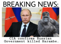 Memes, 🤖, and Cia: BREAKING NEWS:  WORKS  CIA confirms Russian  Government killed Harambe. If its on the interwebs it must be true.
