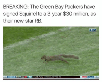 Fake, Green Bay Packers, and Nfl: BREAKING: The Green Bay Packers have  signed Squirrel to a 3 year $30 million, as  their new star RB.  NFL.  WEEKS 23 27 J M. Forte  12 RUSH, 92 YDS, TD LIKE Our Page Fake SportsCenter!