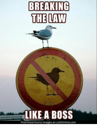 Breaking the law like a BOSS!: BREAKING  THE LAW  LIKE A BOSS  Find more funny images at LolzOnline.com Breaking the law like a BOSS!