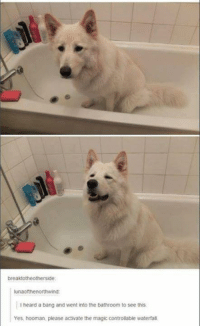 - Trending Memes: breaktotherotherside  lunaofthenorthwind  heard a bang and went into the bathroom to see this.  Yes, hooman, please activate the magic controllable waterfall - Trending Memes
