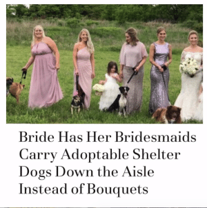 You're all doing it wrong. Important: Most of the Haven of Ozarks shelter pups have been adopted!Via @people: Bride Has Her Bridesmaids  Carry Adoptable Shelter  Dogs Down the Aisle  Instead of Bouquets You're all doing it wrong. Important: Most of the Haven of Ozarks shelter pups have been adopted!Via @people