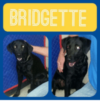 Memes, 🤖, and Php: BRIDGETTE *Please note this animal is not with AAVA - we are networking for rescue as the liaison for the shelter* This baby is in a kill shelter in Abbeville, LA which does not allow public adoptions. Animals must be pulled by an approved rescue or can be adopted through AAVA.  TO ADOPT - fill out an application at http\://aavarescue.com/adoptions.php  RESCUES - all rescues must now go through AAVA. Please contact us at animalaidvermilion@gmail.com. If you are not already approved please fill out a rescue application at http\://aavarescue.com/rescues.php  TO FOSTER - fill out an application at http\://aavarescue.com/volunteer.php  If you have any questions please contact us at animalaidvermilion@gmail.com or (337) 366-0212 or visit our website http\://aavarescue.com for more information.  To donate to AAVA's general rescue fund which helps support the shelter animals needs visit this link paypal.me/animalaidvermilion or visit our website http\://aavarescue.com/support-our-rescue.php Shelter needs can include items such as laundry detergent, baby pools, flea medication, dawn soap, heaters and fans, toys, gas for transports, pull fees for unfunded animals and other types of items.